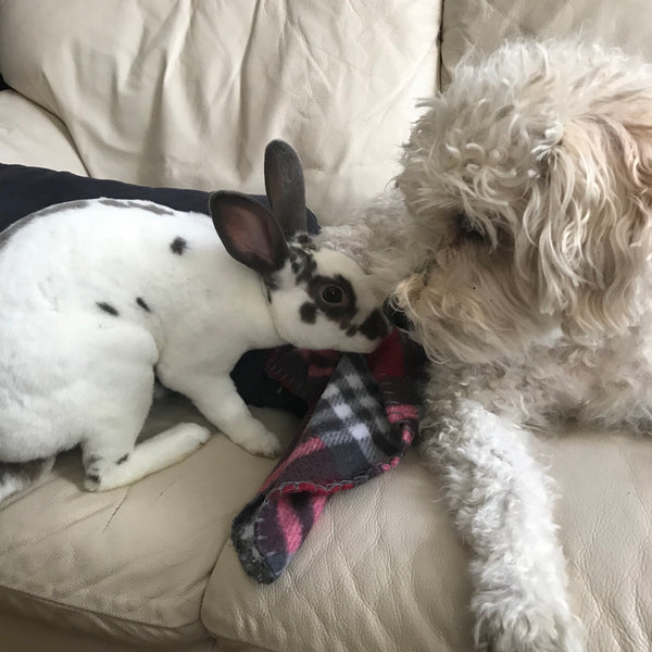 Bunny Binkies and Other Ways I Communicate Without Words