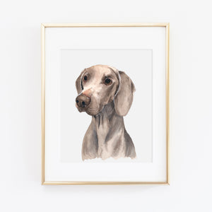 Weimaraner Dog Art Print - Apollo