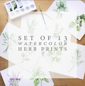 Watercolor Herb Print Set