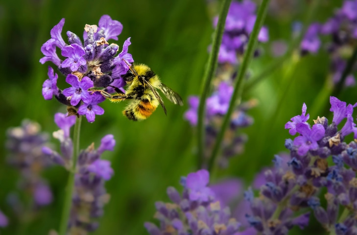 What Are The Best Flowers To Plant For Bees?
