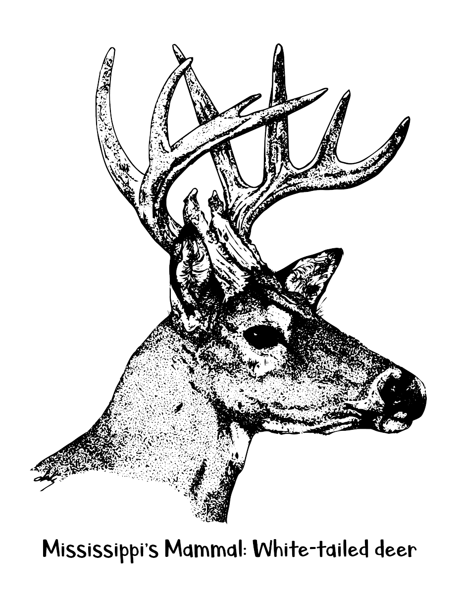deer coloring pages white tailed Coloring4free - Coloring4Free.com   1199x927