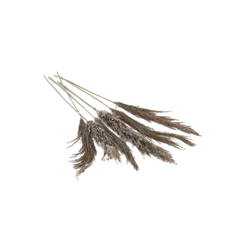"Pampas Grass- 25-28"" Pack of 3"