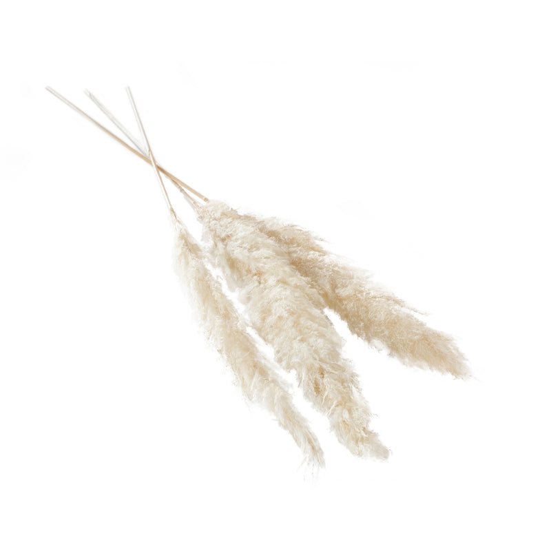 "Pampas Grass- 47-53"" Pack of 3"