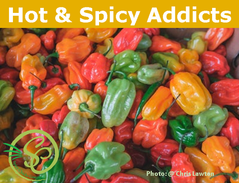 Hot & Spicy Addicts