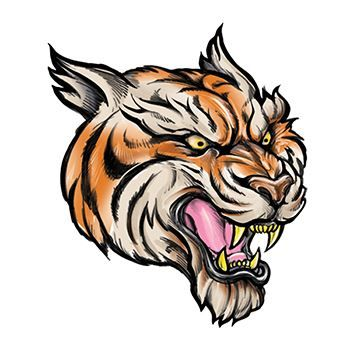 Tiger illustration with mouth open showing fangs looking ferocious.