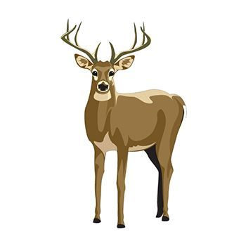 Large proud buck with antlers starring at you; temporary tattoo.