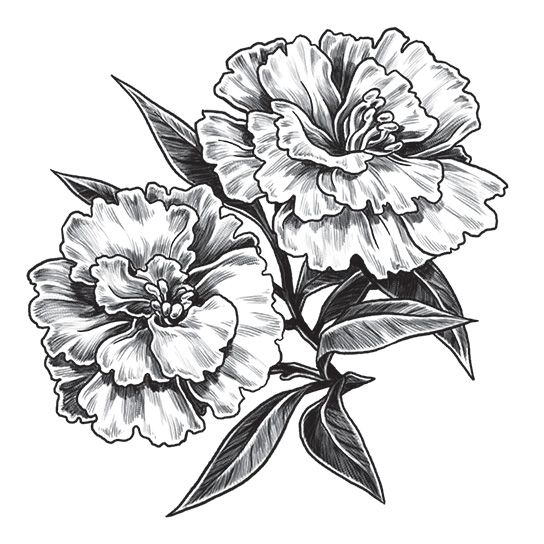 Carnation Temporary Tattoo