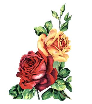 Colored Roses Temporary Tattoo