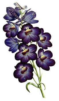 Purple Orchids Temporary Tattoo