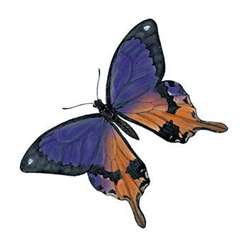 Purple and Orange Butterfly Temporary Tattoo
