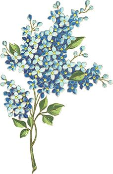 Tiny Blue Flowers Temporary Tattoo
