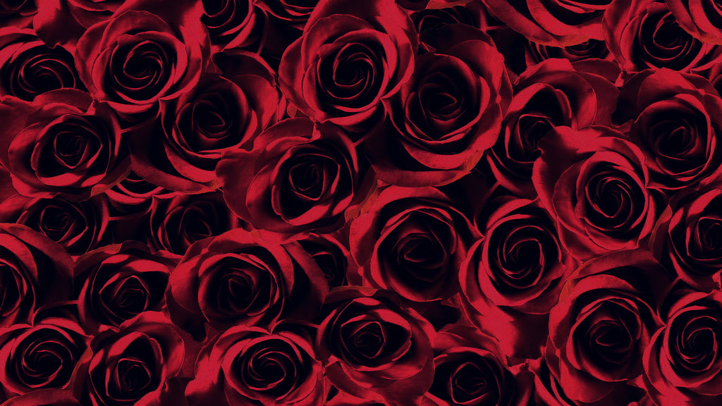long-lasting-roses-about-our-luxury-eternity-roses-uk