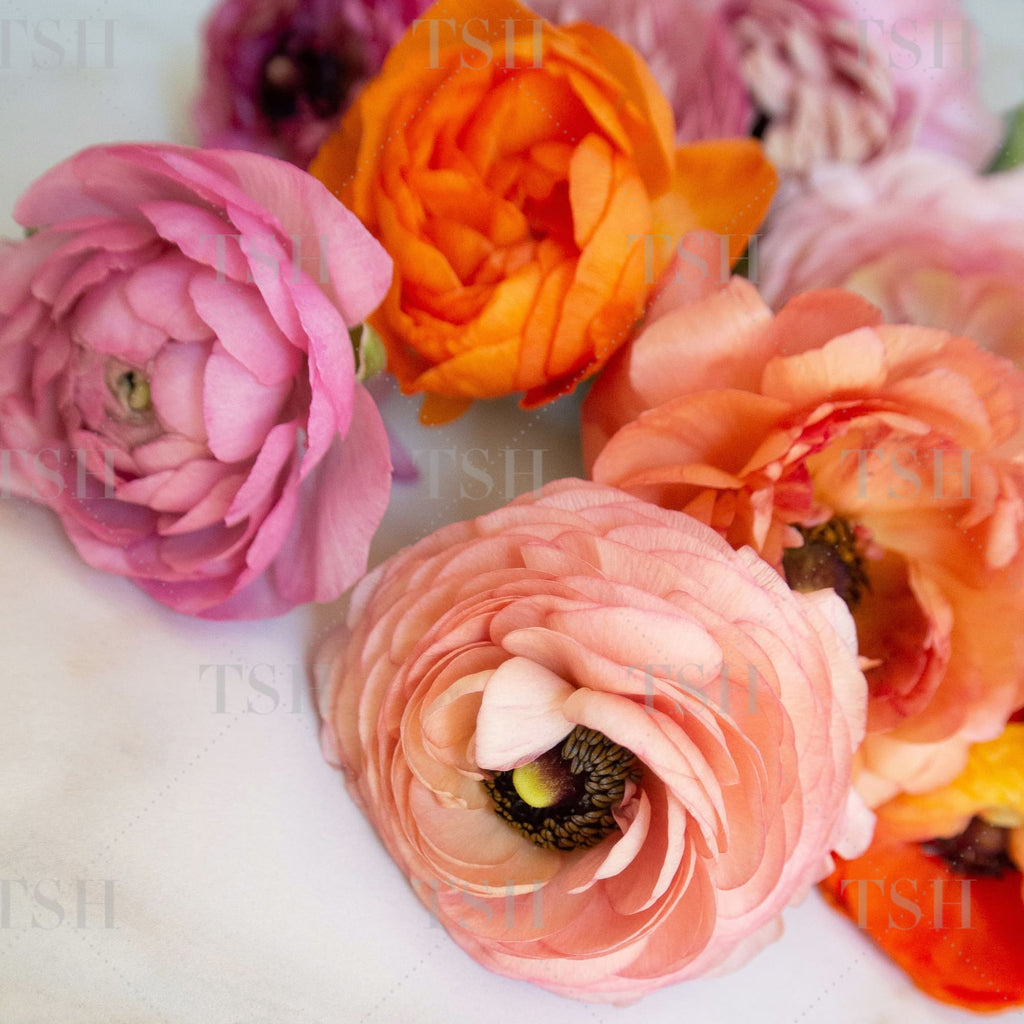Colorful pink, orange, and coral spring flowers on marble background.