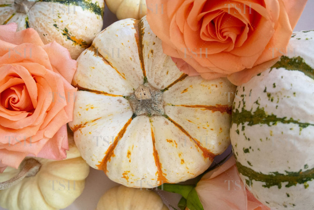 Colorful fall harvest pumpkins and peach roses