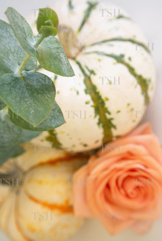 Colorful fall harvest pumpkins with eucalyptus and peach rose