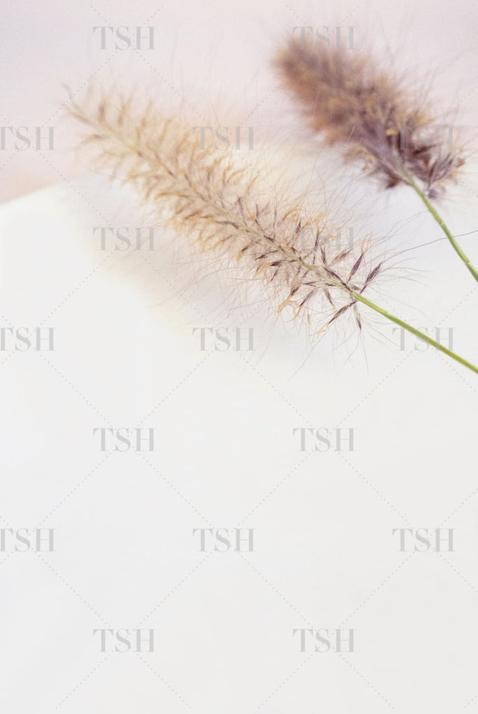 Clean white plate with foxtail stems on blush pink background