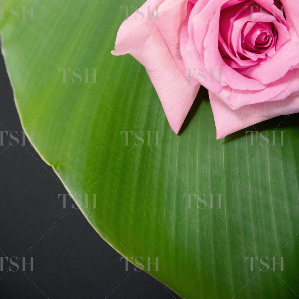 Tropical banana leaf and pink roses on black background.