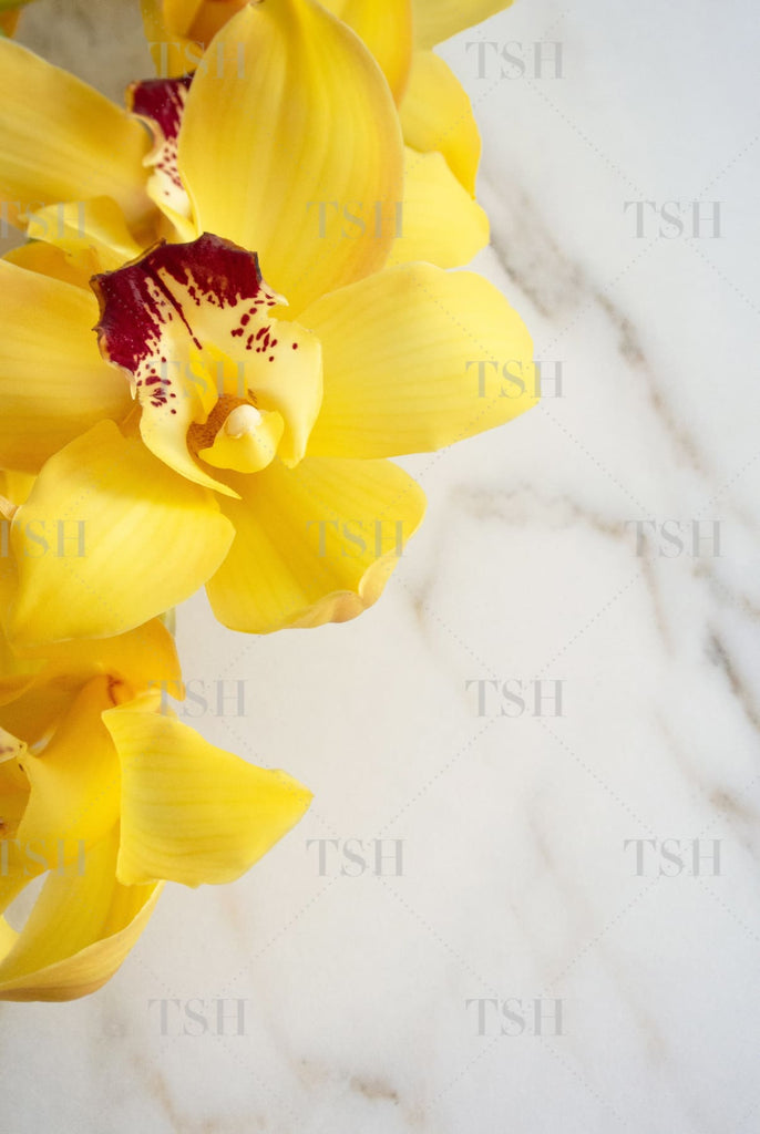 Yellow Cymbidium Orchids on a marble background.