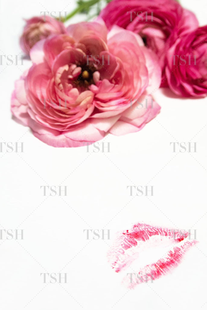 Feminine pink ranunculus flowers and pink lipstick kiss on a white background.