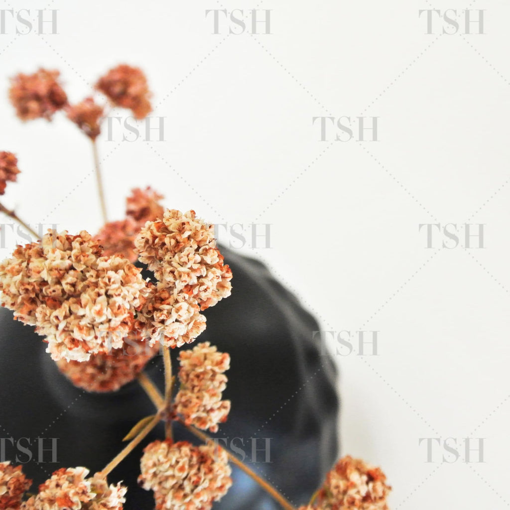 Botanical close up of neutral color organic dried flowers in round black vase on white background.