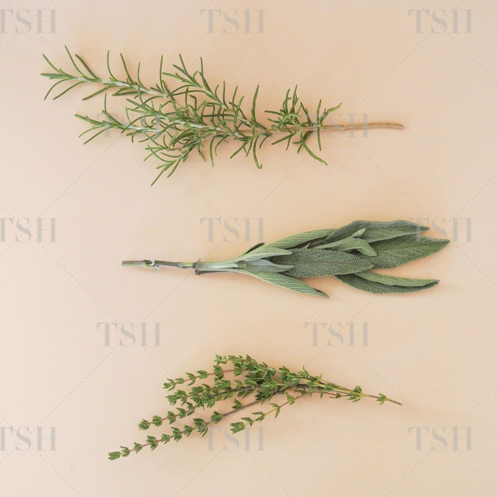 Fresh rosemary, sage, and thyme herbs on neutral peach nude peach background.