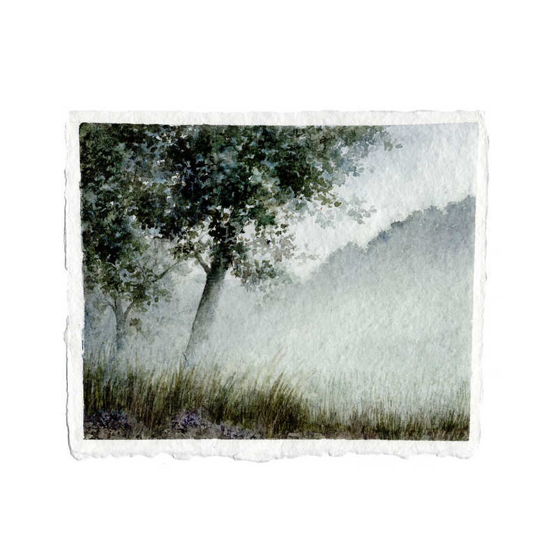 Tree in the Mist | 8x10