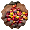 COVID - 19 Safety Protocol for Colombia Coffee Harvest Season