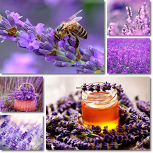 Load image into Gallery viewer, Pure Beeswax Soap with Royal Jelly & Lavender 115g