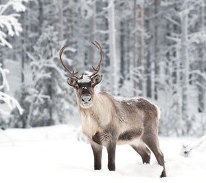 DOE, A DEER, A FEMALE REINDEER: THE SPIRIT OF MOTHER CHRISTMAS via Gather Victoria
