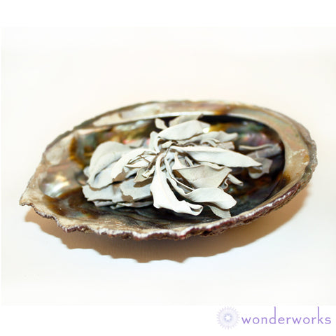 White Sage in Abalone Shell Wonderworks