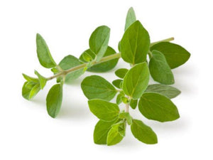 Oregano Essential Oil Wonderworks