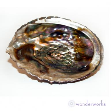 Abalone Shell Wonderworks