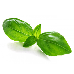 Basil Essential Oil (15ml)