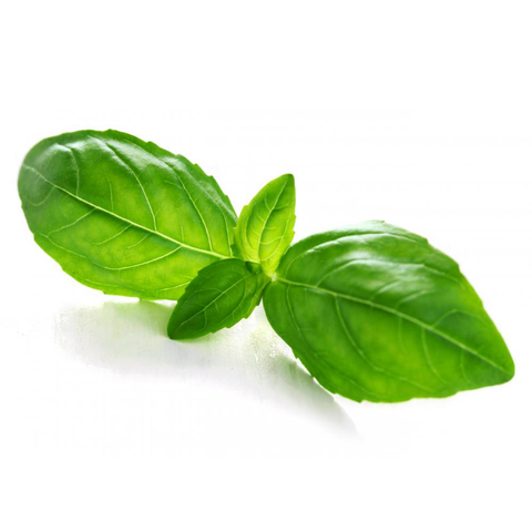 Basil Essential Oil Wonderworks