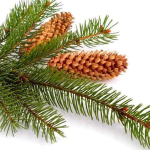 Black Spruce Essential Oil (15ml)