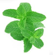 Spearmint Essential Oil (15ml)