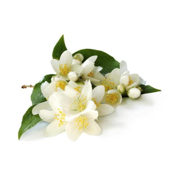 Jasmine 10% Essential Oil (15ml)