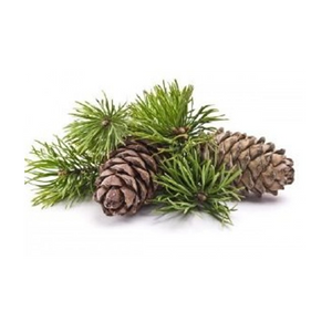 Scotch Pine Essential Oil (15ml)