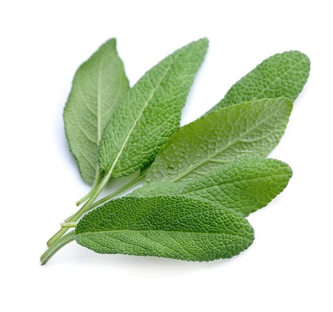 Sage Dalmatian Essential Oil (15ml)