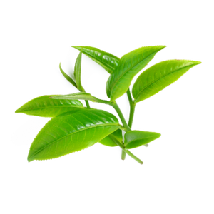 Tea Tree Essential Oil (15ml)