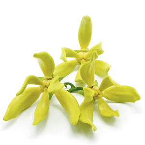 Ylang Ylang Essential Oil (15ml)
