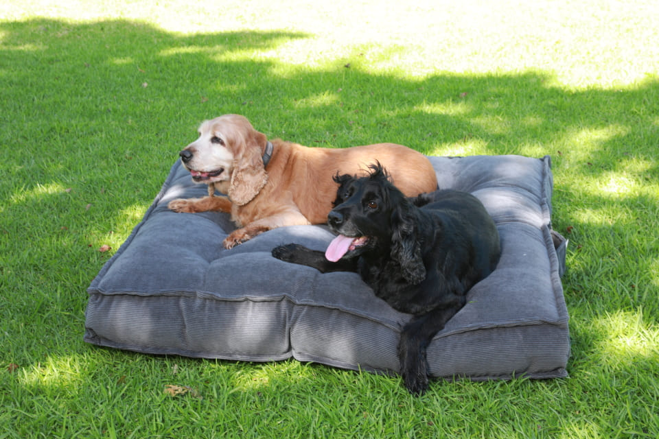 DOG BEDS - Happy Sak SA