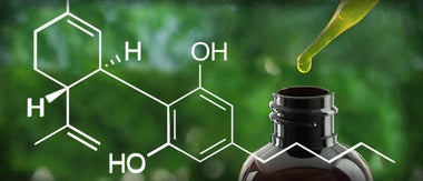 What is the CBD Extraction Technology?