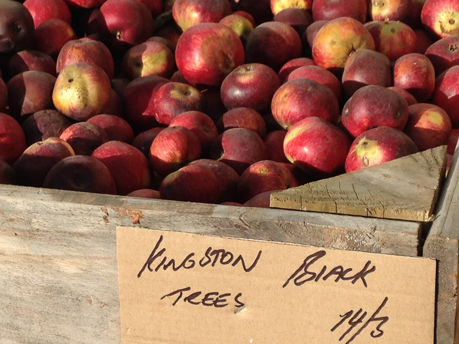 Kingston Black Apples