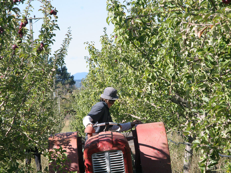 Mowing the Cider Orchard