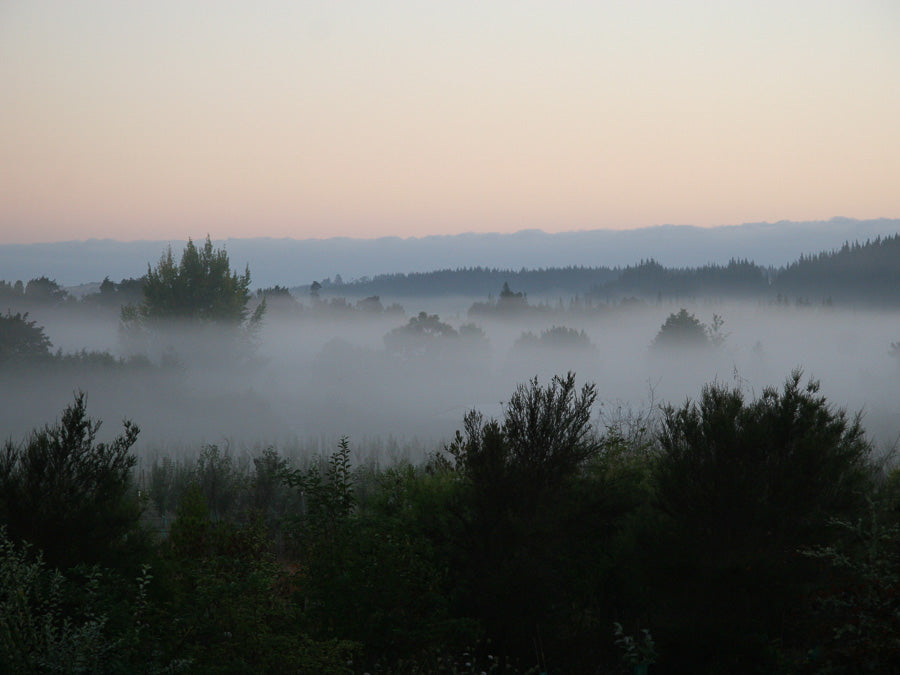 Mist over the Cider Orchard