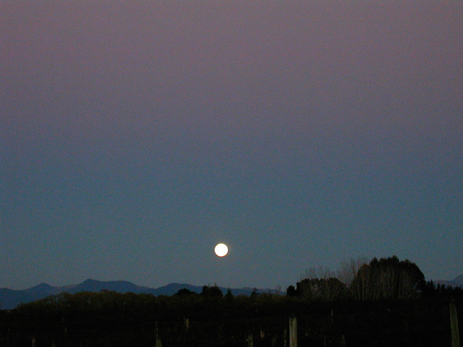 Full Moon over the Cider Orchard