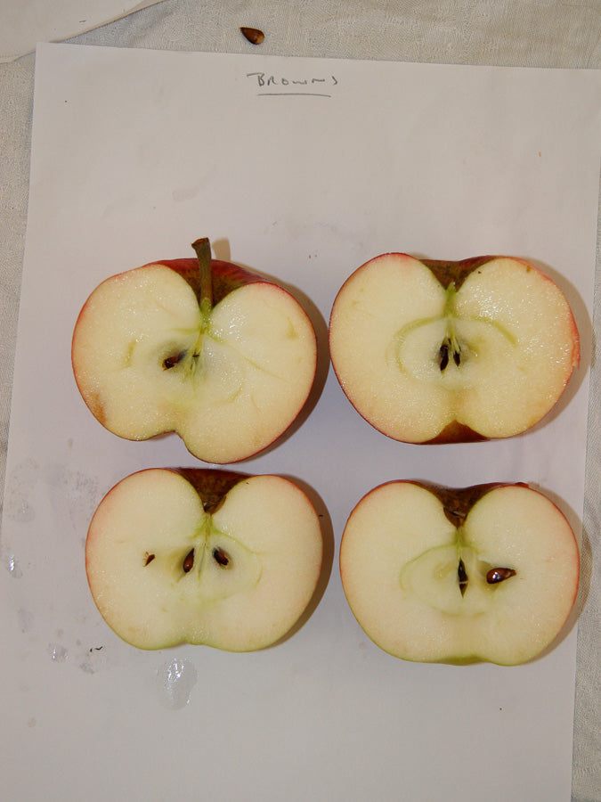 cut Cider Apples