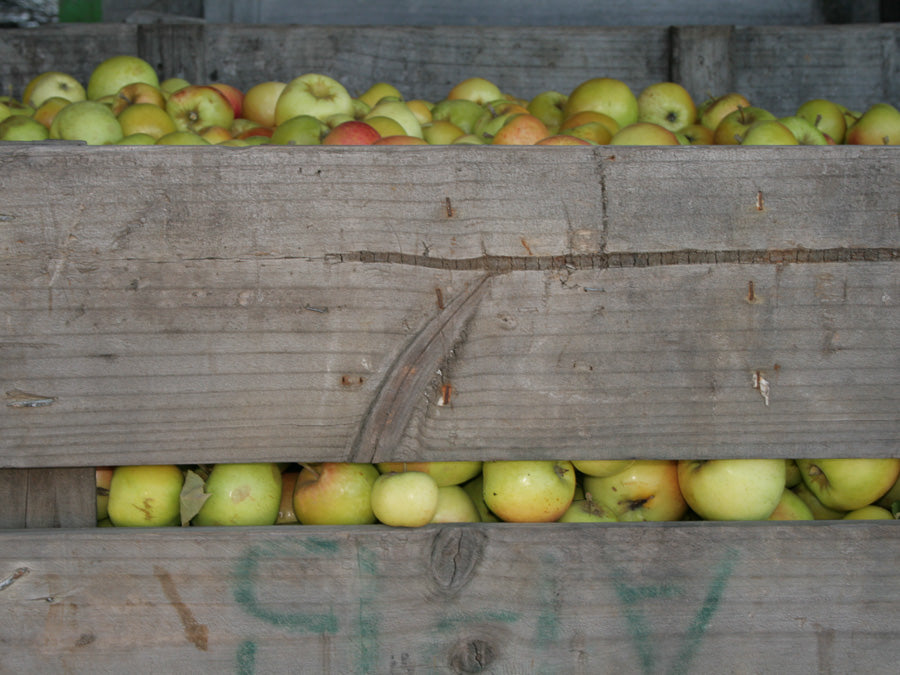 Cider Apples 13