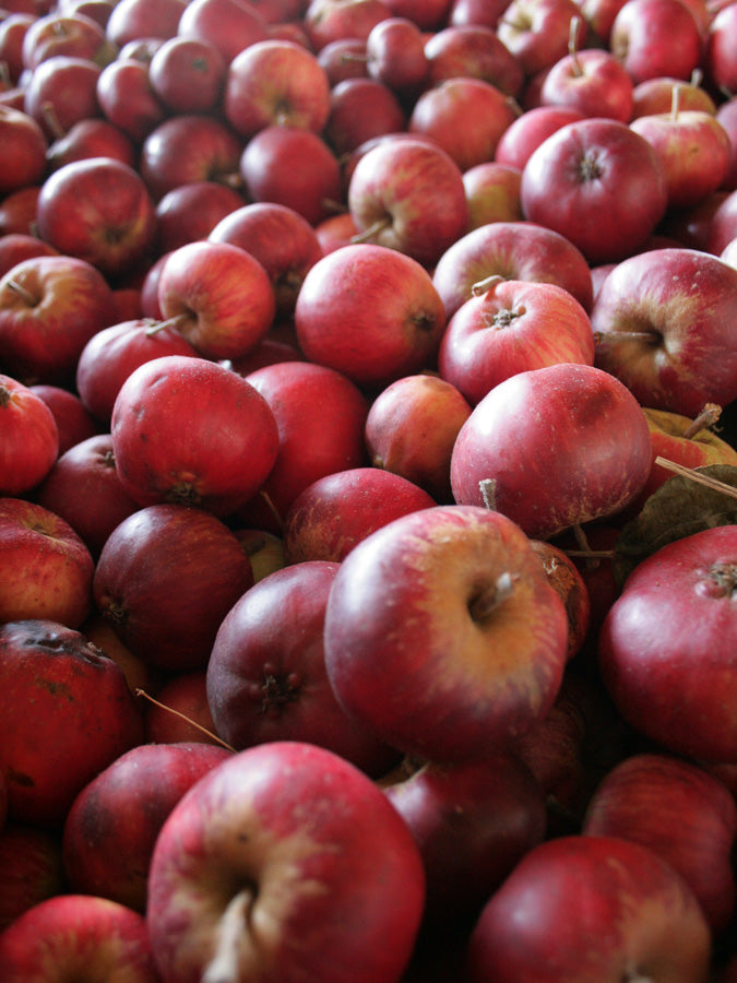 Cider Apples 16